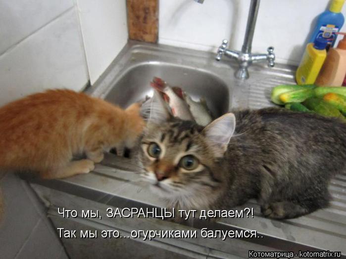 4326608_kotomatritsa_l (700x524, 46Kb)