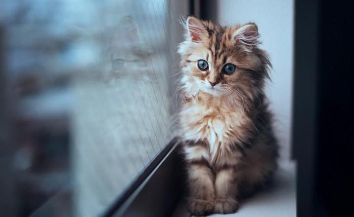 Daisy_kitten_8-720x441 (700x466, 44Kb)