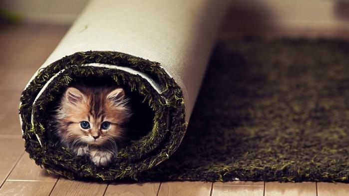 Daisy_kitten_11-720x405 (700x393, 69Kb)