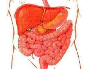 Восстановление кишечника (300x237, 11Kb)