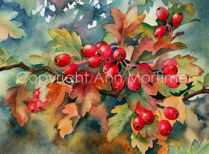 4430707_website_Hawthorn_berries (700x515, 184Kb)