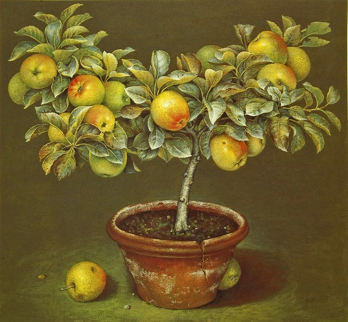 APPLE TREE IN TERRACOTTA POT 68x73 Gouache 1989 (700x646, 151Kb)