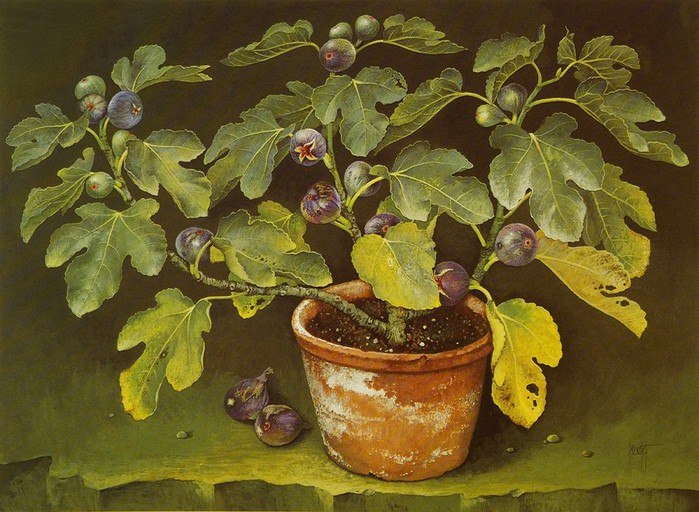 FIG TREE IN TERRACOTTA POT 56x84 cms Gouache 1989 (700x512, 121Kb)