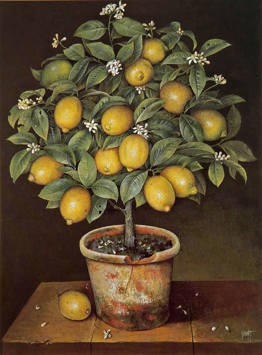 LEMON TREE 81x61 cms Gouache1988 copy (517x700, 301Kb)
