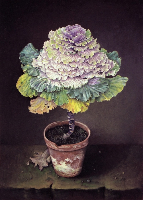 ORNAMENTAL CABBAGE 70 x 46cm (502x700, 267Kb)