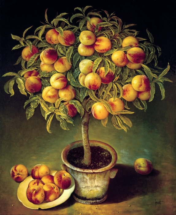 PEACH TREE IN CLAY POT 91x76 cms Oil on canvas 1991 (574x700, 324Kb)
