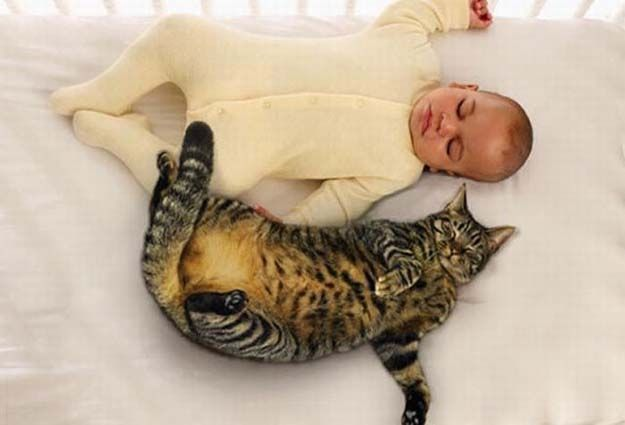 babies_and_cats_01511_001 (625x425, 32Kb)