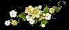 0_39cef_e974fef4_XS.jpg (100x44, 7Kb)