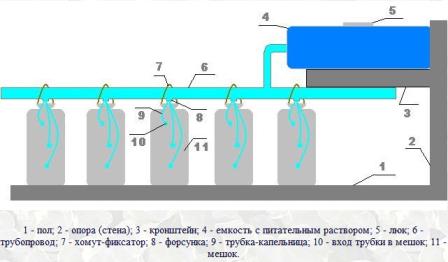 klubnika-v-meshkah (448x262, 96Kb)
