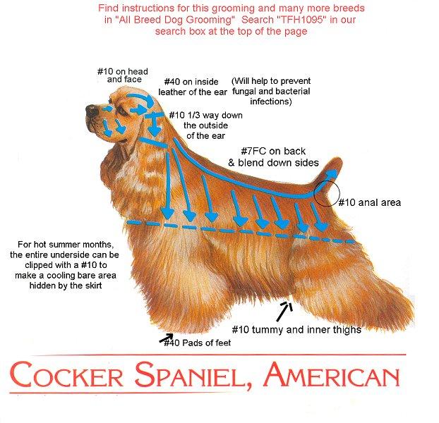 Схема стрижки американского кокер спаниеля 2