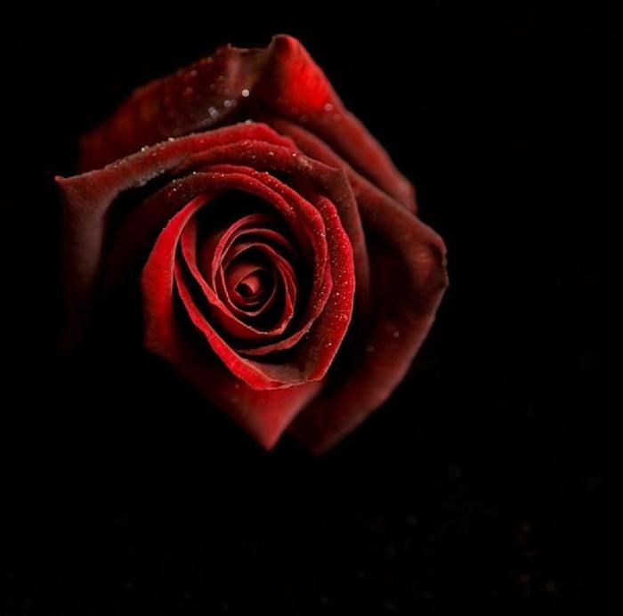 роза2 (700x692, 40Kb)