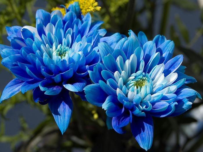 Синие цветы картинки 7