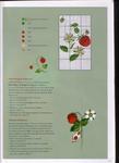 Превью Acufactum-Sommergaeste (47) (508x700, 257Kb)