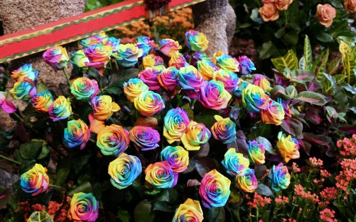Разновидности цветов в картинках 4