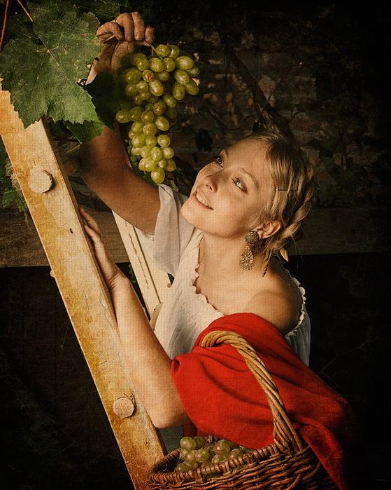 Сбор винограда. (559x699, 160Kb)