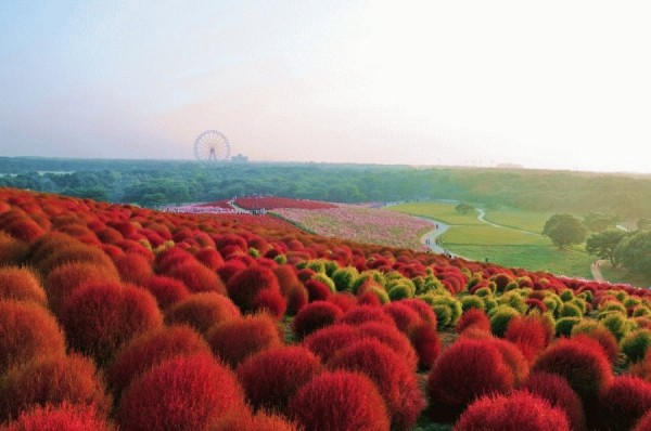 парк в японии (600x398, 54Kb)