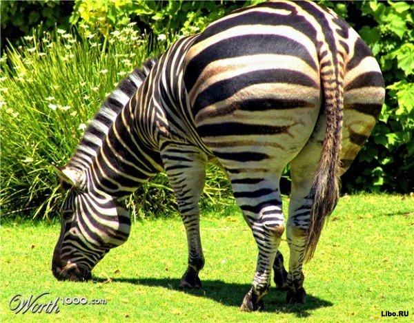 смешные фото зверей (600x469, 111Kb)