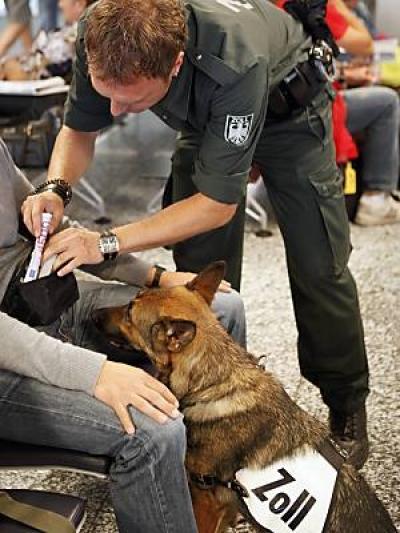 Овчарка Дина- собака с супернюхом. 26896
