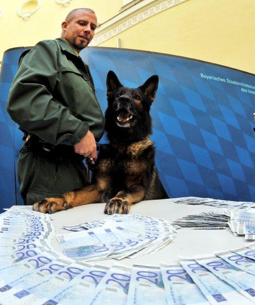 Овчарка Дина- собака с супернюхом. 62428