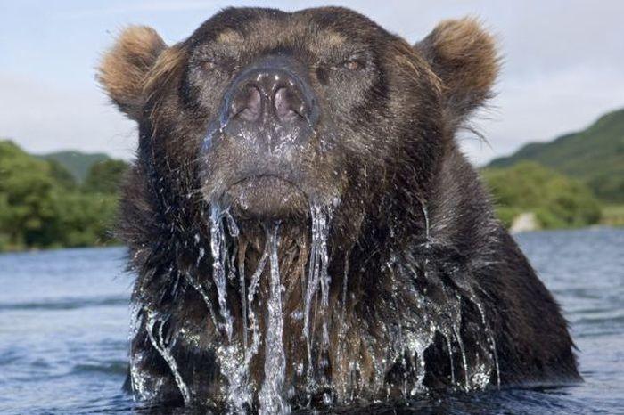 bear_01 (700x466, 64Kb)