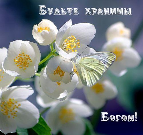 http://img1.liveinternet.ru/images/attach/c/6/90/957/90957109_90883288_0_2a574_9668257_L.jpg