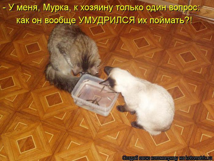 kotomatritsa_T9 (700x524, 64Kb)