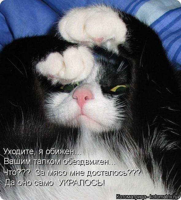 kotomatritsa_wQ (590x651, 67Kb)