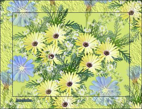 Цветы-полевые (459x352, 364Kb)