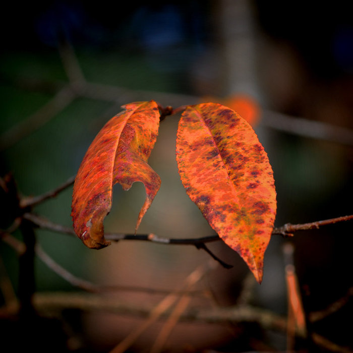Autumn_Surrenders_by_Tailgun2009 (500x500, 70Kb)