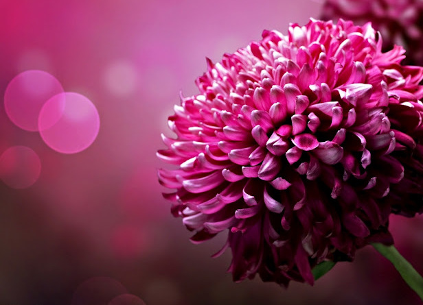 6386_flower_with_beautiful_scene_ (616x445, 94Kb)