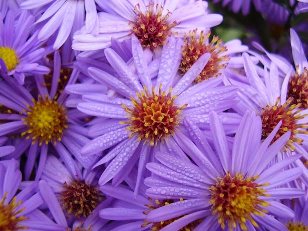 flowers 3 (616x462, 109Kb)