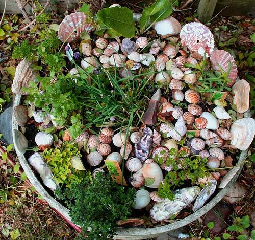 садовые декоративные растения фото и названия