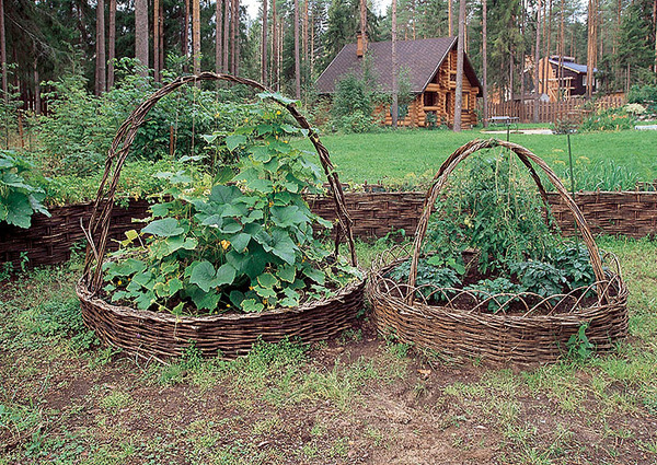 Дача сад и огород своими руками фото фото 664