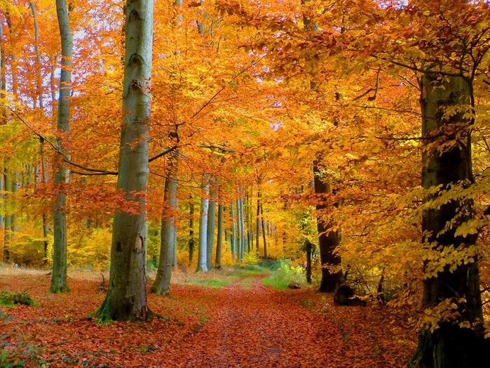 Закружила осень листопадами, заблистала хрупкой красотой... 28140