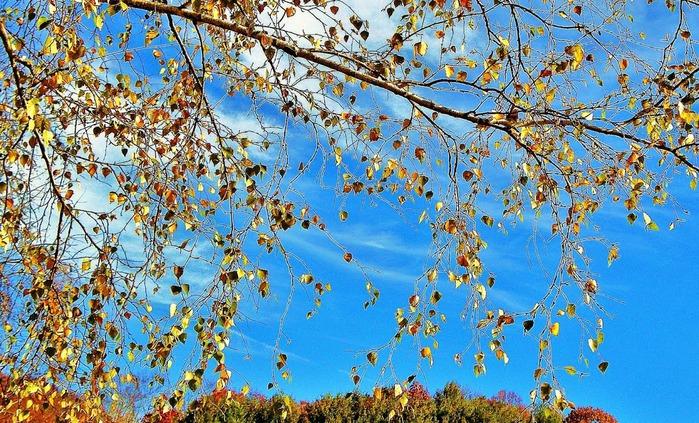 Закружила осень листопадами, заблистала хрупкой красотой... 93404