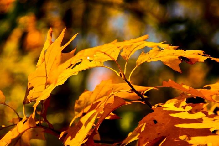 Закружила осень листопадами, заблистала хрупкой красотой... 15537