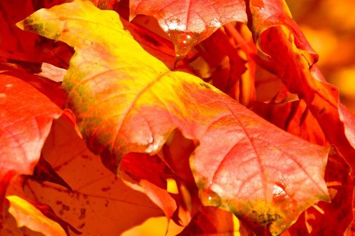Закружила осень листопадами, заблистала хрупкой красотой... 94620