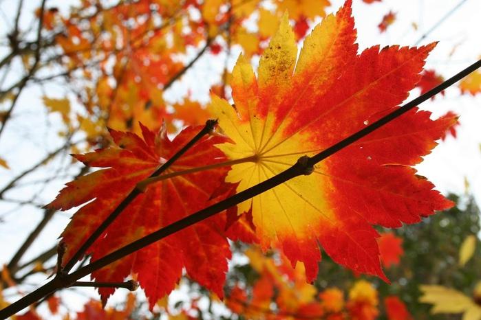 Закружила осень листопадами, заблистала хрупкой красотой... 61638