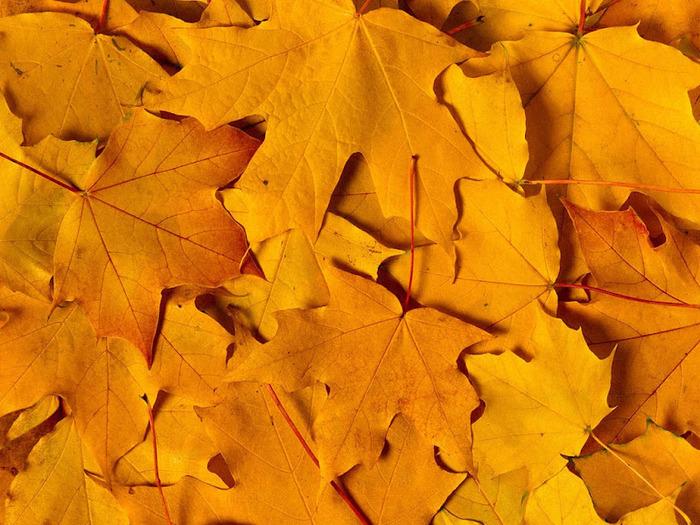 Закружила осень листопадами, заблистала хрупкой красотой... 32763