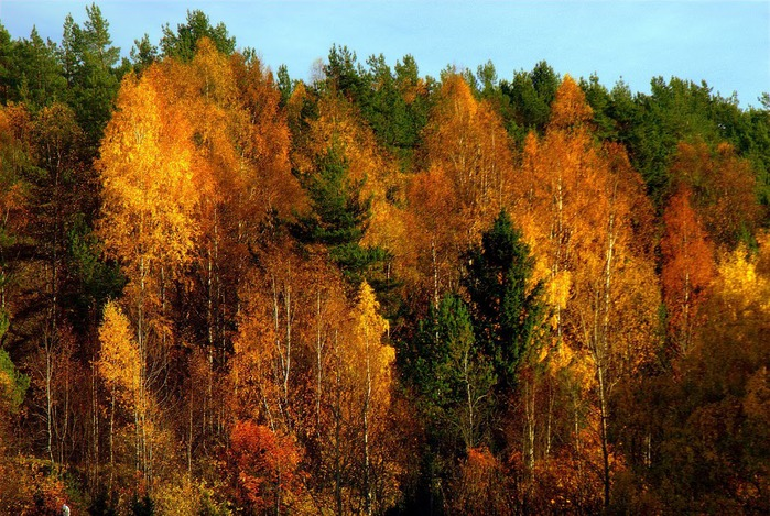 Закружила осень листопадами, заблистала хрупкой красотой... 38019