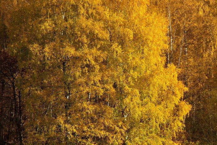 Закружила осень листопадами, заблистала хрупкой красотой... 31573