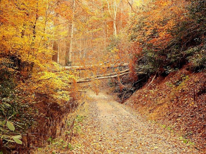 Закружила осень листопадами, заблистала хрупкой красотой... 35259