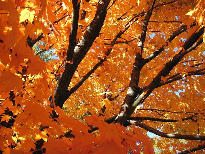Закружила осень листопадами, заблистала хрупкой красотой... 66686