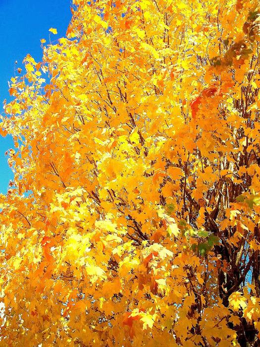 Закружила осень листопадами, заблистала хрупкой красотой... 54512