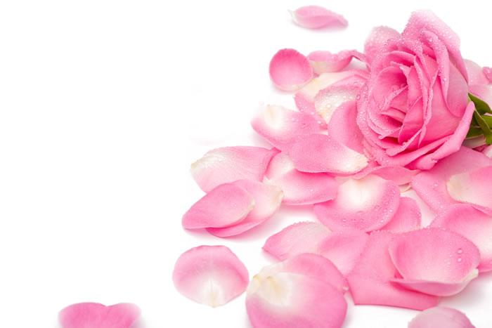 лепестки роз (700x467, 35Kb)