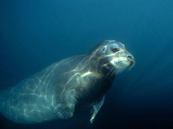 Ocean-Life-Photography01 (600x450, 19Kb)