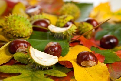7779849-composition-of-autumn-chestnuts-and-leaves-on-isolated-background (400x267, 27Kb)