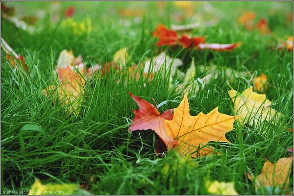 красивые открытки осень: