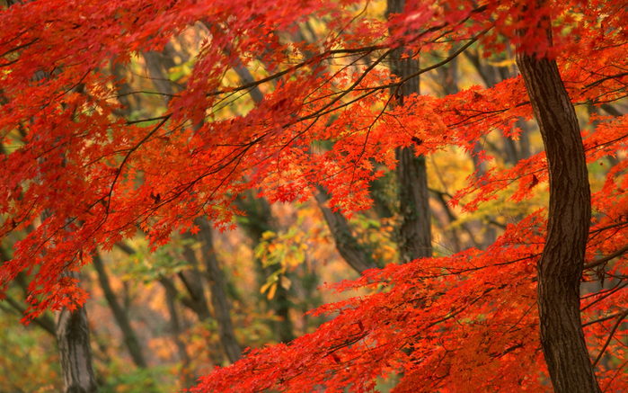 Autumn Forest (700x437, 547Kb)