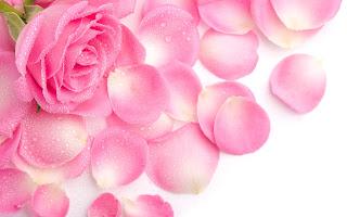 роза (320x200, 21Kb)